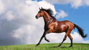 horse 040156706 16